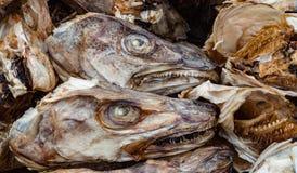 Cabeças secadas dos peixes para a exportação Fotos de Stock Royalty Free