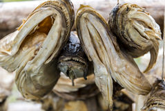 Cabeças secas dos peixes Fotos de Stock