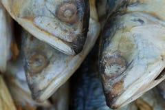 Cabeças secas dos peixes Foto macro Foto de Stock Royalty Free