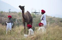 Cabeças vermelhas Fotos de Stock Royalty Free