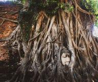 Cabe?a da Buda fotos de stock