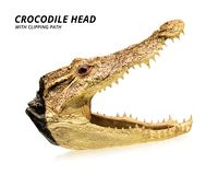 Cabe?a do crocodilo isolada no fundo branco Taxidermia ou bicho de pelúcia Trajeto de grampeamento fotos de stock royalty free