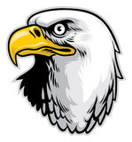 Cabeça da águia Fotos de Stock