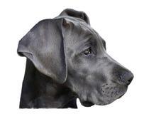 Cabeça de cão Foto de Stock Royalty Free