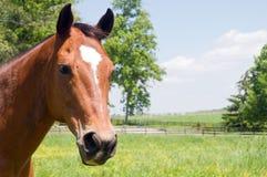 Cabeça do cavalo marrom Fotografia de Stock Royalty Free