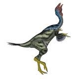 A cabeça do dinossauro de Caudipteryx acima de 3D rende Fotografia de Stock Royalty Free
