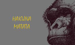 Cabeça do macaco em preto e branco Foto de Stock