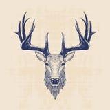 Cabeça dos cervos Imagens de Stock Royalty Free