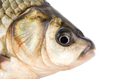 Cabeça dos peixes Imagens de Stock Royalty Free