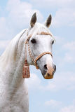 Cabeça árabe no céu Fotos de Stock Royalty Free