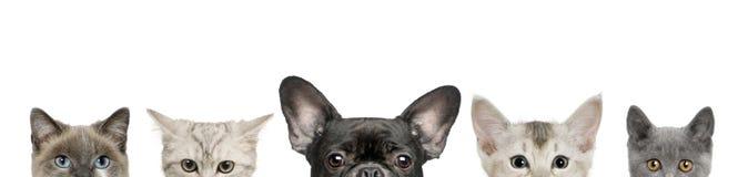Cabeças da cabeça e do gato de cão Imagens de Stock Royalty Free