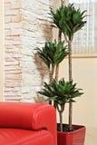 Cabecero de cuero rojo del sofá y planta verde Imagen de archivo libre de regalías