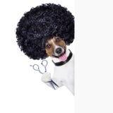 Cabeleireiro   cão Fotografia de Stock