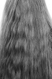 cabelo ilustração stock