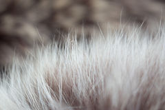 Cabelo animal, Imagens de Stock Royalty Free