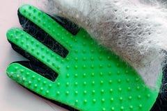 Cabelo branco e cinzento do animal de estimação na luva verde após a preparação, remoção das lãs imagem de stock