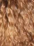 Cabelo Curly Imagem de Stock