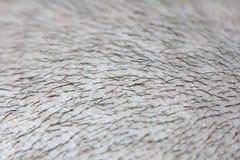 Cabelo curto em um fim principal acima A cabeça do homem do escalpe baldness Homem calvo Problemas com crescimento do cabelo na c imagem de stock royalty free