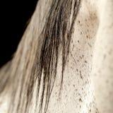 Cabelo do cavalo Imagem de Stock Royalty Free