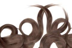 Cabelo do chocolate de Brown isolado no fundo branco Rabo de cavalo bonito longo na forma do círculo foto de stock