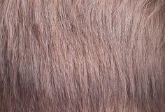 Cabelo fêmea | Textura Imagens de Stock