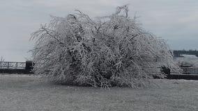 Cabelo frio desgrenhado Foto de Stock