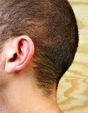 Cabelo Graying do cabelo, o branco e o cinzento primeiro Fotografia de Stock Royalty Free