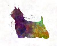 Cabelo longo do yorkshire terrier na aquarela Foto de Stock Royalty Free