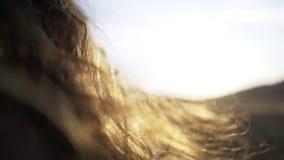 Cabelos que batem no sol que brilha vídeos de arquivo