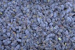 cabernet - sauvignon Стоковое Изображение