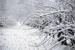 Cabernet-Sauvignon nella neve Fotografia Stock Libera da Diritti