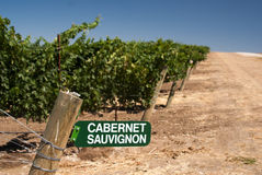 Cabernet Sauvignon Sign in California Vineyard Royalty Free Stock Photography