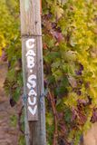 Cabernet Sauvignon signpost with grapevines in autumn. Row of cabernet sauvignon grapevines in autumn with painted signpost Stock Images