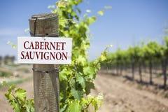 Cabernet - sauvignon tecken på vingårdstolpen royaltyfri fotografi