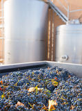 Cabernet Sauvignon Vinemaking With Grapes And Tanks Royalty Free Stock Photo