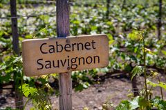 CABERNET SAUVIGNON Wine sign on vineyard. Vineyard landcape.  royalty free stock photography