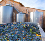 Cabernet sauvignon winemaking with grapes and tanks Royalty Free Stock Photo