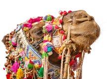 Cabeza adornada del camello aislada en el fondo blanco Imagen de archivo