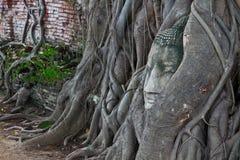 Cabeza de Buda imagen de archivo libre de regalías