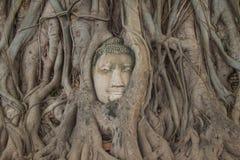 Cabeza de Buda Imagen de archivo