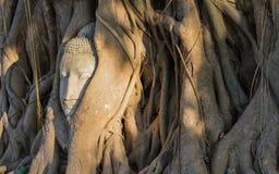 Cabeza de Buda en árbol de las raíces en Wat Mahathat, Ayutthaya Tailandia imagen de archivo libre de regalías