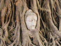 Cabeza de Buda en la raíz del árbol Fotografía de archivo