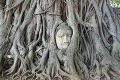 Cabeza de Buda en la raíz del árbol, Ayutthaya Imagen de archivo