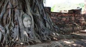 Cabeza de Buda en raíces Imagen de archivo libre de regalías