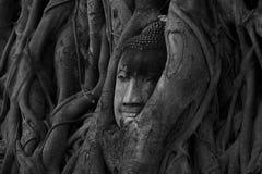 Cabeza de Buda en raíces del árbol fotografía de archivo