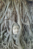 Cabeza de Buda en raíz del árbol en ayutthaya Fotos de archivo
