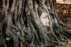 Cabeza de Buda en raíz del árbol en el templo de Mahathat, Ayutthaya histórico Fotografía de archivo