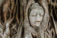 Cabeza de Buda en un tronco de árbol Fotos de archivo