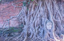 Cabeza de Buda, Wat Mahathat Ayutthaya, Tailandia Imagenes de archivo