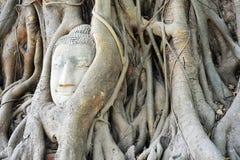 Cabeza de Budda Imagen de archivo